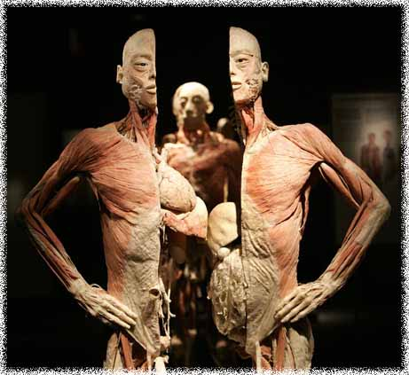 bodies_exhibition
